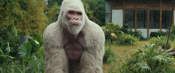 George, o último gorila da sua espécie, que terá de se juntar a Dwayne Johnson para salvar a cidade de Chicago